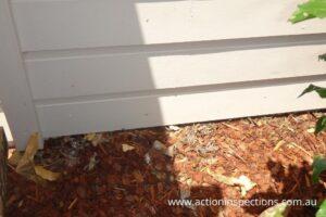 Termite Risk and Poor Building Practice